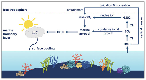 Coral reefs as a source of climate-active aerosols [PeerJ]
