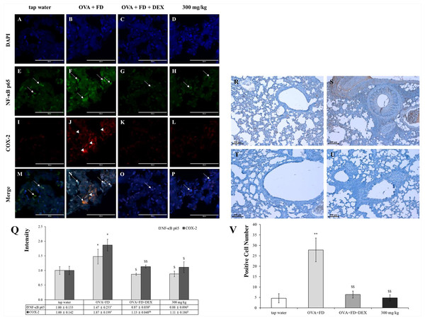 Saururus chinensis (SC) water-extract controlled inflammation through the NF-κ B/COX-2 and PGE2 axis.