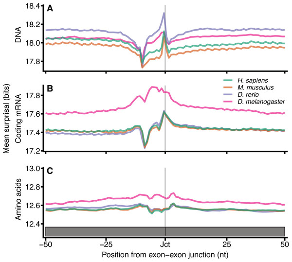 Surprisal across exon–exon junctions reveals non-coding information within coding sequences.