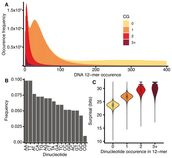 H. sapiens DNA k-mer distributions are dependent on CG content.