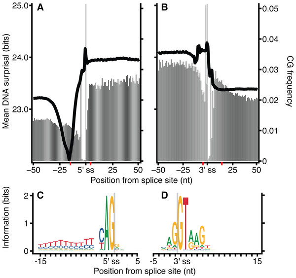 CG dinucleotide count affects H. sapiens exon intron boundary surprisal.