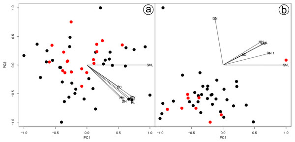 Results of a Principal Component Analysis (PCA) on the morphometric variables.