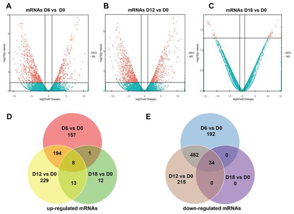 Expression Profiles of mRNAs.