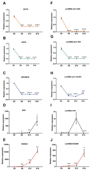 Validation of DElncRNAs and mRNAs in MN differentiation.