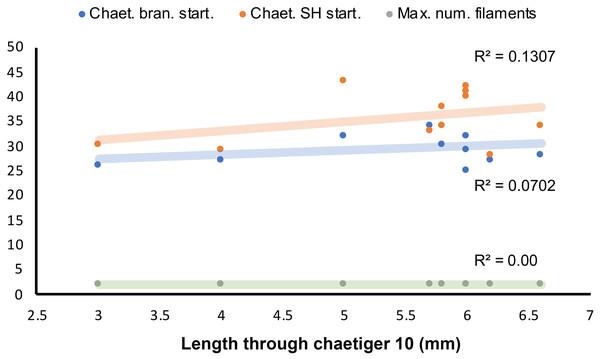 Length-dependent variation of some morphological features in Marphyssa sherlockae n. sp.