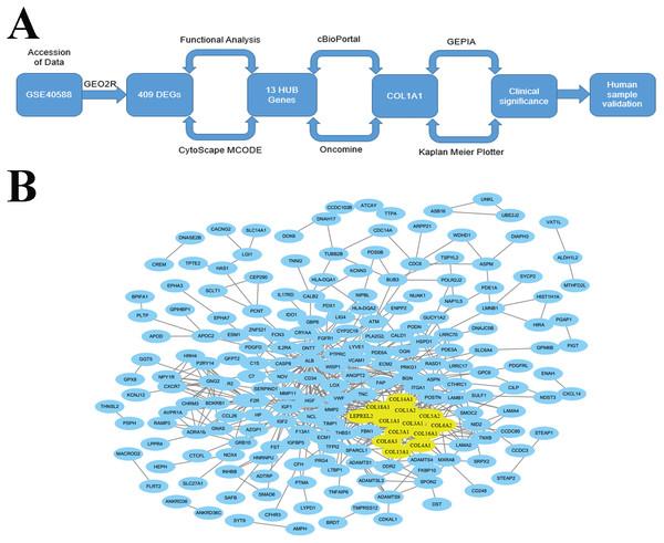 Identification of LSCC HUB Genes.