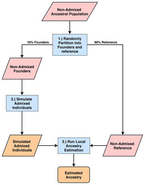 Process for simulating admixed individuals and estimating ancestries.