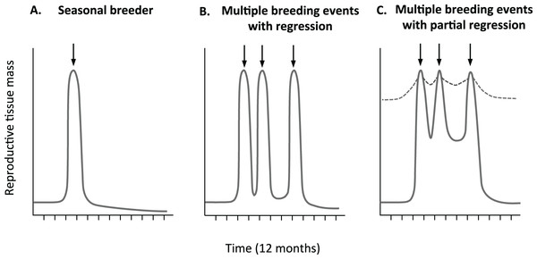 Predicted relative change in reproductive tissue mass.