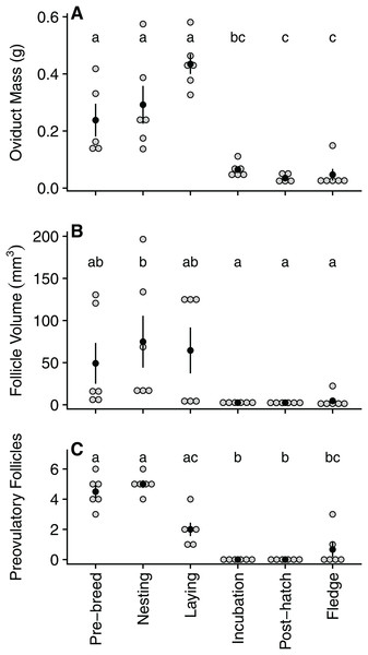 Quantified variation in zebra finch reproductive tract tissue across and within the six stages of the reproductive cycle.