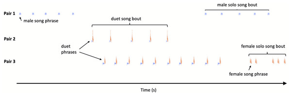 Sketch illustration of multichannel recording output with different pairs of the Yellow-breasted Boubous producing alternating, overlapping and type matching song bouts.