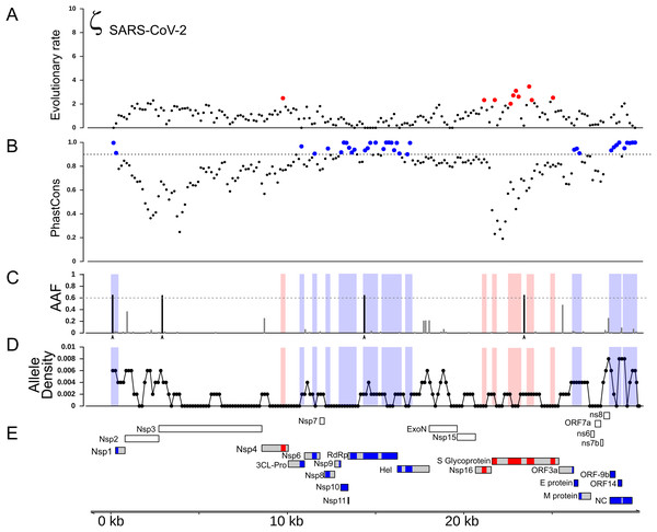 Distribution of positive selection, PhastCons conservation, and polymorphic variation across the SARS-CoV-2 genome.