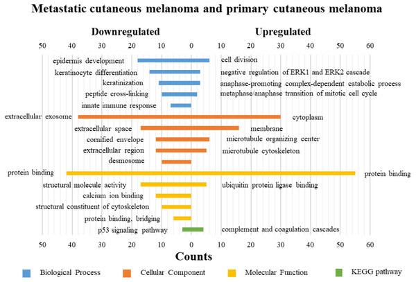 GO functions and KEGG pathways enrichment analysis of the upregulated and downregulated genes between metastatic cutaneous melanoma and primary cutaneous melanoma.