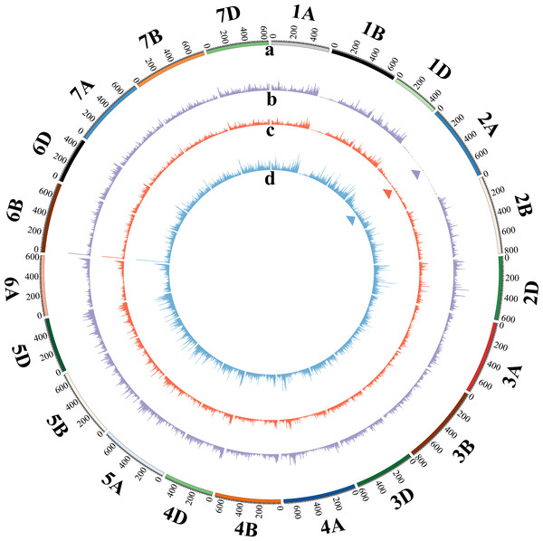 Circular diagram of the reads distributed on the 21 wheat chromosomes of T, M and D plants.