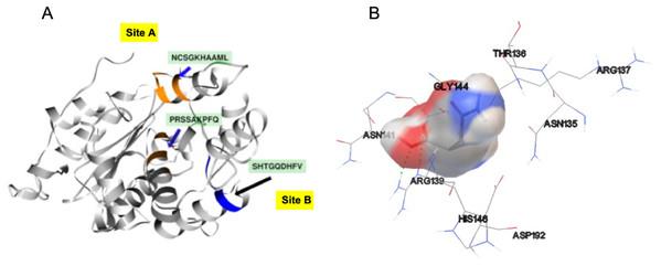 SsAII-2 putative binding sites.