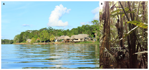 A remote tropical peatland community in Buenos Aires (A), within the Pacaya Samiria National Reserve, Peruvian Amazon, which is accessible only by boat.
