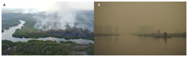 Peatland fire encroaching into forest (A) and local fishers working under thick haze conditions from peatland fires (B) in Central Kalimantan, Indonesia.