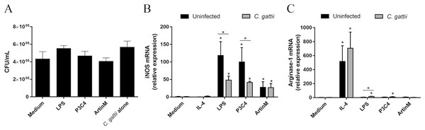 C. gattii growth was not reduced by RAW 264.7 cells incubated with TLR2 and TLR4 agonists due to unbalance of iNOS/Arg-1 expression.