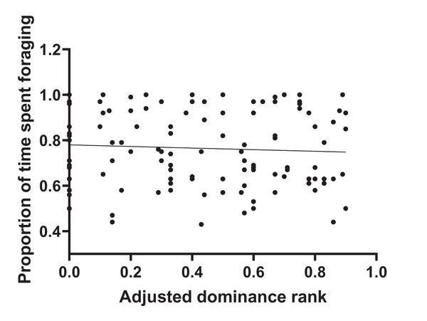 Total foraging time as a function of adjusted dominance rank.