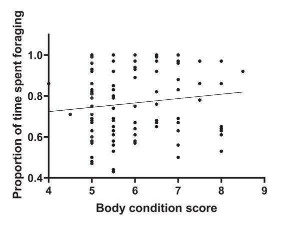 Total foraging time as a function of body condition score.