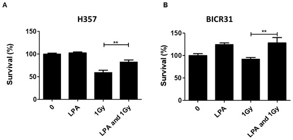 LPA protects OSCC cells against irradiation.