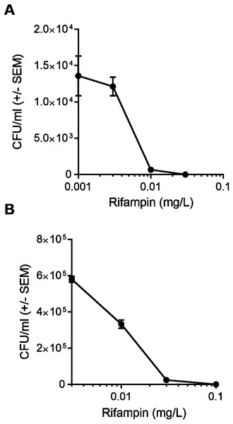A higher concentration of rifampin is required when there is an increase in the bacterial load.