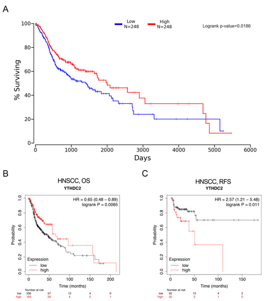 The prognostic significance of YTHDC2 expression in head and neck squamous cell carcinoma (HNSCC) from public database.