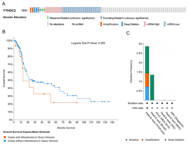 Gene alteration of YTHDC2 in head and neck squamous cell carcinoma (HNSCC).