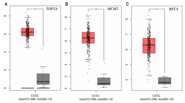 Expression level of three significantly expressed genes in CESC tissues and normal tissues.