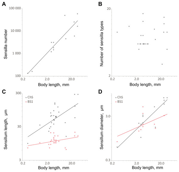 Changes in antennal sensilla properties in Coleoptera.