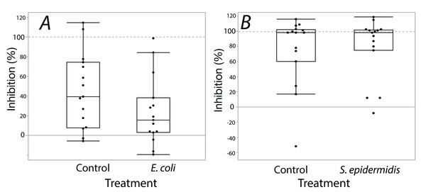 Extracts from B. chinensis showed similar bacterial inhibition ability with or without treatment exposures.