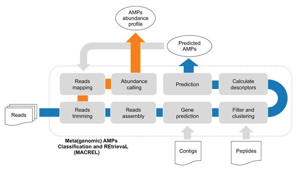 (Meta)genomic AMPs Classification and REtrievaL: Macrel pipeline.