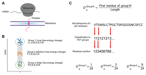 The FET–Free energy transition—measures estimates the propensity of peptides to fold when transferring from water to the membrane.