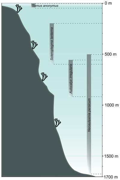 Bathymetrical range of selected sponge species.