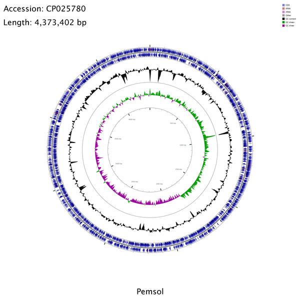 Circular genome map for Stenotrophomonas sp. Pemsol.