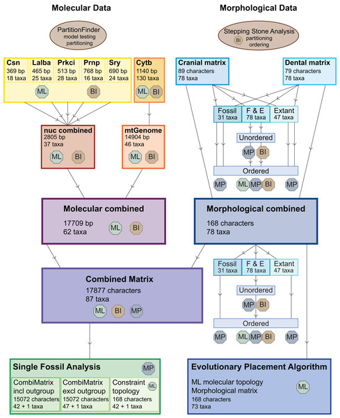 Overview of all analyses.
