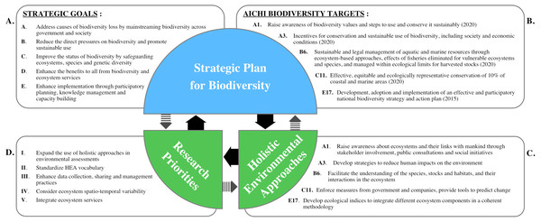 Conceptual diagram of interactions and relationships between the Strategic Goals (A), the Aichi Biodiversity Targets (B), Holistic Environmental Approaches (C), and the identified research priorities (D).