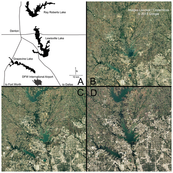 Urbanization in north central Texas observed from satellite imagery.