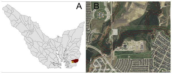 Visual examination of portions of a riparian corridor in a sub-watershed within the highest riparian corridor restoration quartile.