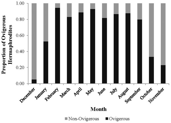 Monthly proportion of ovigerous vs. non-ovigerous hermaphrodites.