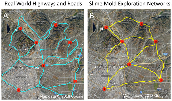Comparison of slime mold exploration and existing road network.