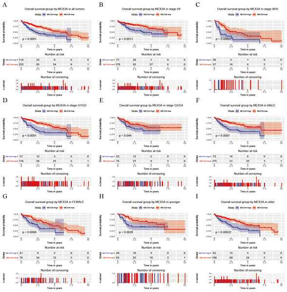 Analysis of OS between high and low expression groups of MEX3A according to the different clinical variables of liver cancer patients.