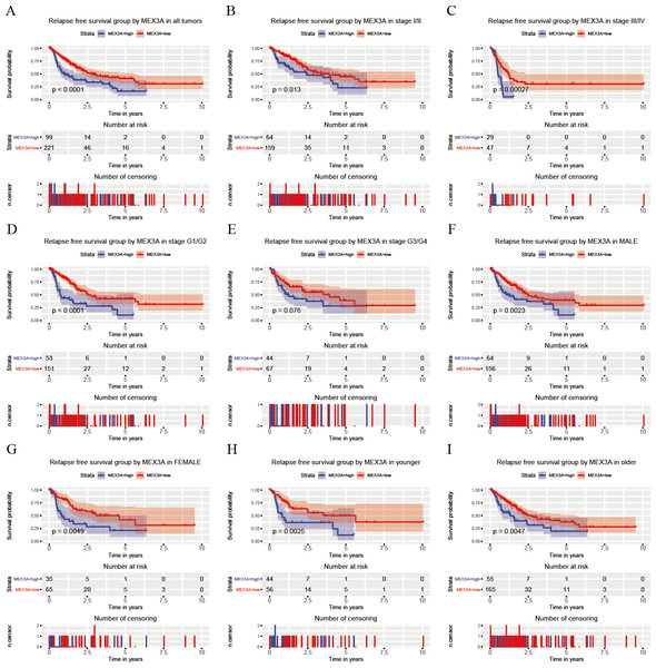 Analysis of RFS in high and low MEX3A expression groups according to the clinical variables of liver cancer patients.