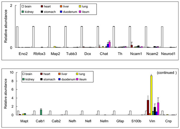"""Relative abundance of genes encoded """"specific"""" neural proteins expressed in different organs in rats (Mean ± SD, n=3)."""