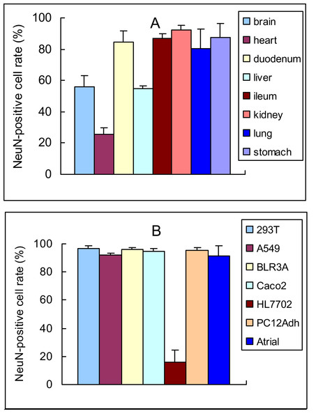 Quantitative analysis of NeuN-positive cells in rat organs and cultured cells (mean ± SD, n=3).