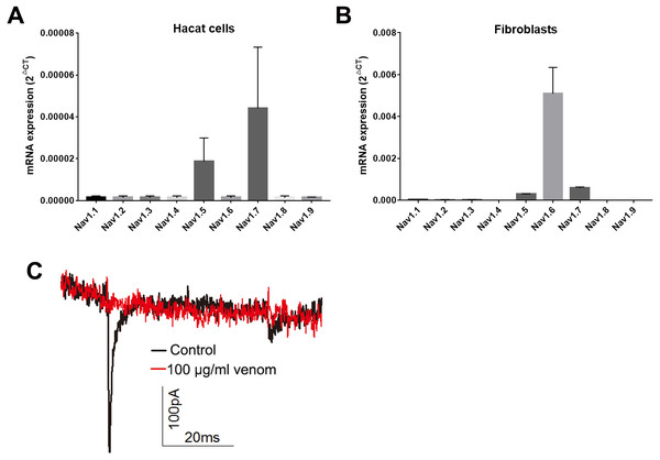 Venom inhibits the currents of voltage gated sodium channels in Hacat cells.