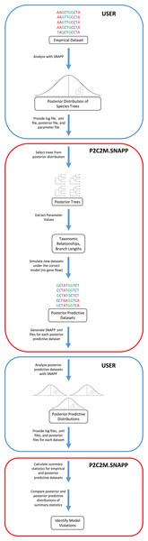 Workflow of the P2C2M.SNAPP pipeline.