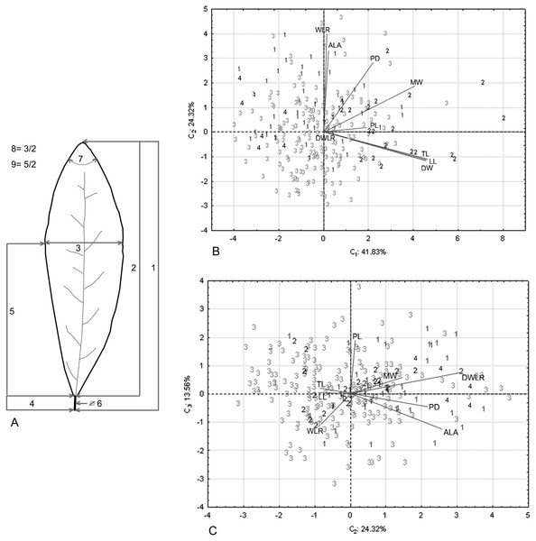 Nine foliar traits and Principal Component Analysis (PCA) of this variables.