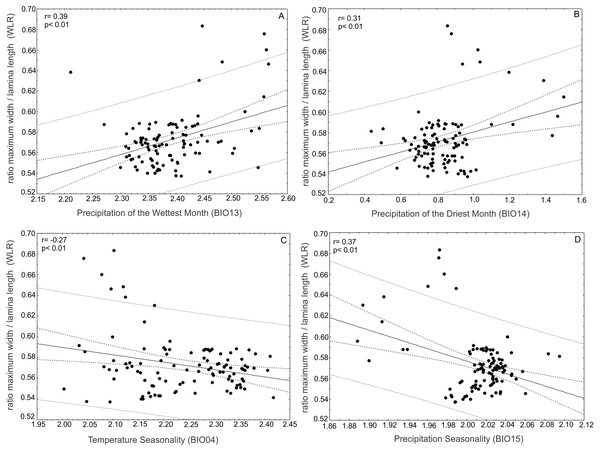 Correlations of the ratio between maximum width of the lamina/leaf length (WRL) and bioclimatic variables.