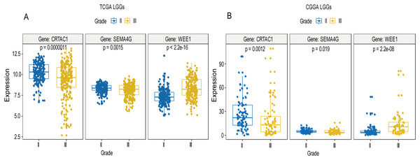 Expression of the three genes between grade II tumor and grade III tumor in training set and validation set.