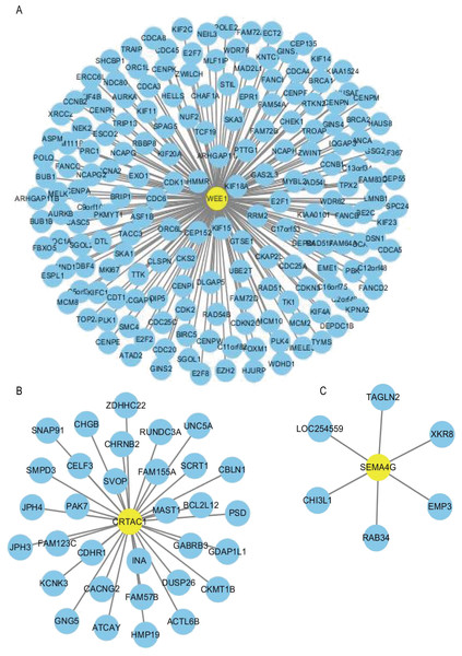 Co-expression network of the three-gene signature.